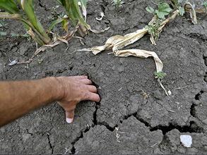 Спад производства в сельском хозяйстве, на которое приходится 4% ВВП России, по итогам лета может составить до 30–40%. Фото: РИА Новости
