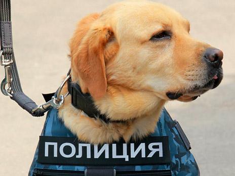 http://m1.bfm.ru/news/maindocumentphoto/2012/09/27/politsiya_3.jpg